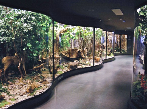 Muzeul de Istorie Naturala Brukenthal, Sibiu